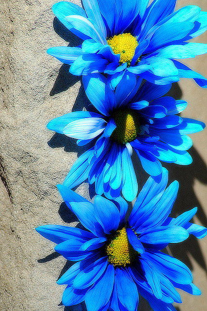 Blue Rhapsody by mysza831 on Flickr.