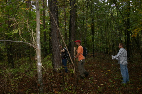 Location, Location, Location<br /><br /><br /><br /><br /><br /> Tim, Michael, Alyssia- Barred owl habitat study<br /><br /><br /><br /><br /><br /> This research looks to determine the habitat suitability index (HSI) for Barred owls along the greenway trails. Measurements will be made based on the U.S. Fish and Wildlife's model. With this research we hope to better understand a little more about the Barred owl's behavior. It may give us some clues as to how long the current mating pair may use the area as a nesting area.