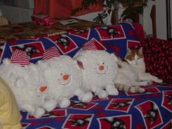 Muffin & 3 Snowballs