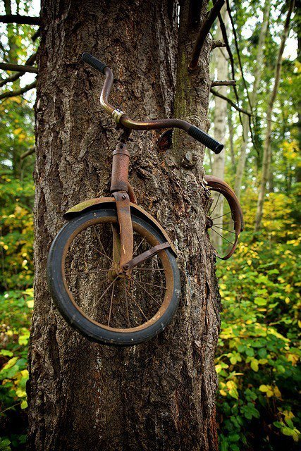 three-moons:   A boy left his bike chained to a tree when he went away to war in 1914. He never returned, leaving the tree no choice but to grow around the bike. Photographer Unknown  wow :'(