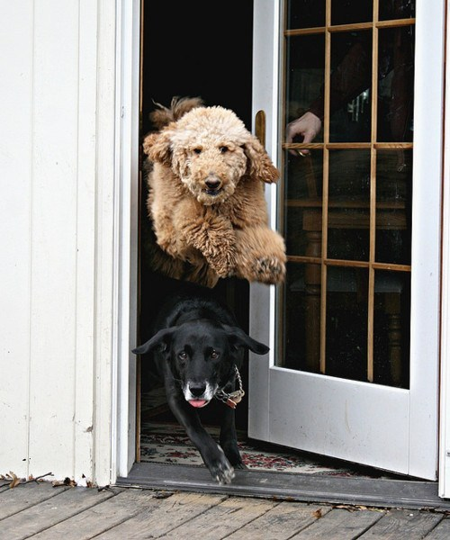 Why do you think they are racing to get out the door?<br /><br /><br /><br /> Write down a story from the perspective of one of the dogs.<br /><br /><br /><br /> Reblogged from reneechall