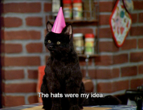 funny 90s Sabrina the teenage witch salem salem the cat