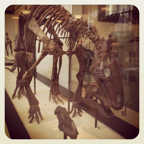 Taken with Instagram at American Museum of Natural History