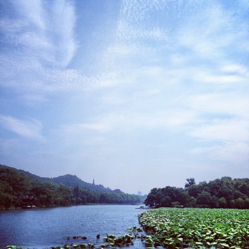 西湖·盛夏
