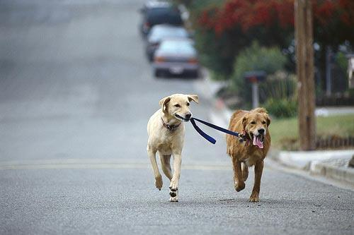 funnywildlife: Awww, walking the blind dog!!