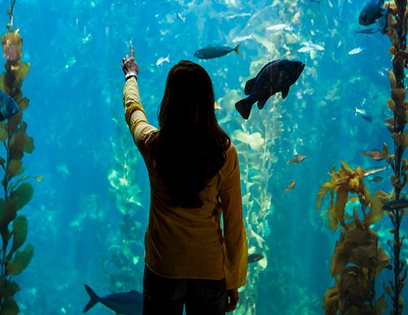 woman looking at fish