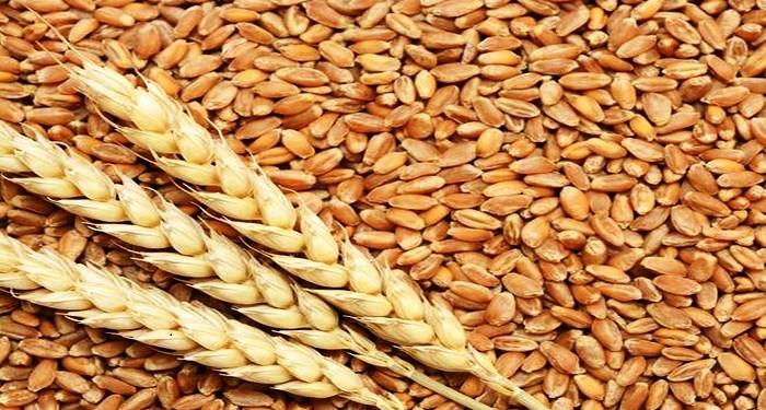 wheat production in UP