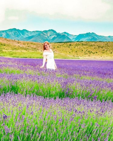 New Zealand alpine lavender farm South Island