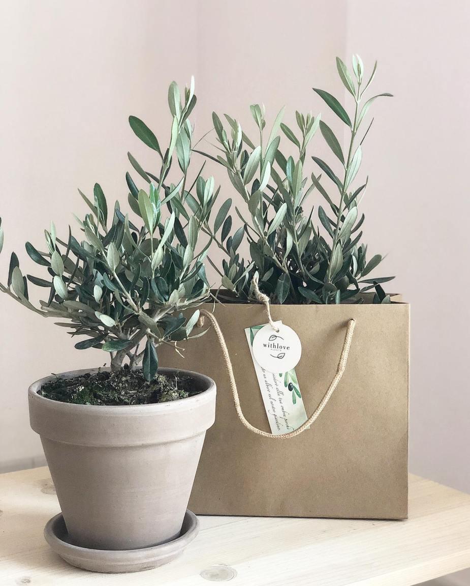 regali green e sostenibili