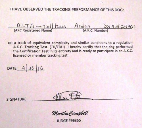 Aiden earns his AKC Tracking Dog Title | Long-Dangerous Tails