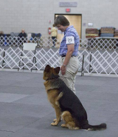aiden-obedience-2