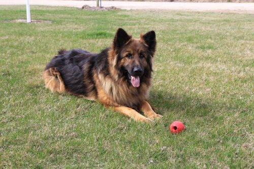 17. Grizz with his ball