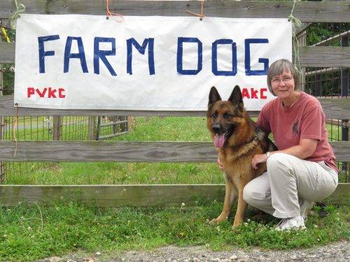 6-25-17 Alta-Tollhaus Aiden - Farm Dog Test 1 (1)