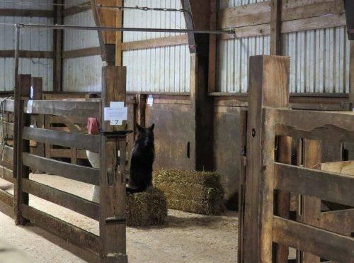 6-25-17 Farm Dog Test 1 (42)