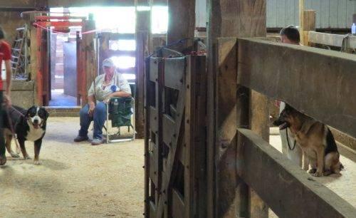 6-25-17 Farm Dog Test 1 (47)