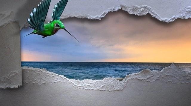 hummingbird-3347576_640