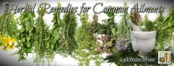 Herbal Remedies for Common Ailments