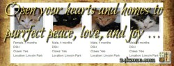 Open your hearts and homes to purrfect peace love and joy