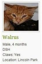 Walrus a.k.a. Leo
