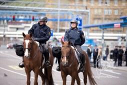 Police horses.