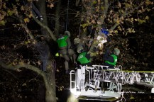 Special forces evict protestors from trees.