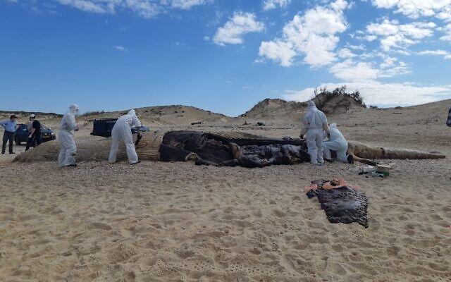 A whale was thrown ashore