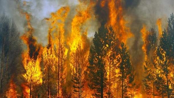 Сохраняется высокая пожарная опасность лесов