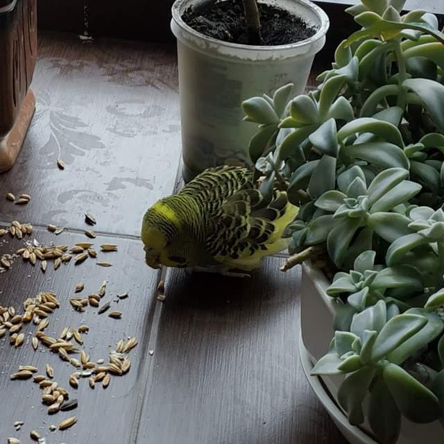 Папуга у бібліотеці: у Києві шукають власника блудного птаха