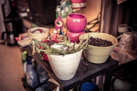"""Die Aloe-Vera-Pflanze ist sein Augapfel, er hat sie aus dem Abfall gefischt: """"Wer wirft denn so etwas weg?"""""""