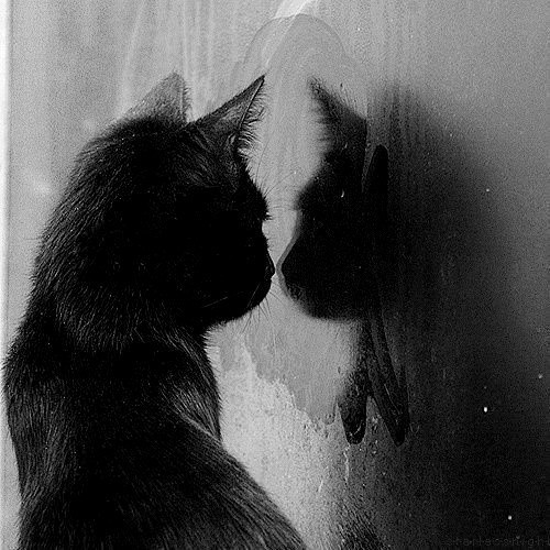 What do you see in your reflection?