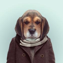 DOG por Yago Partal para ZOO RETRATOS