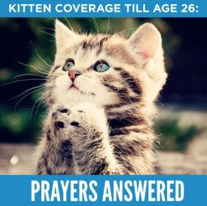 For kittens & Americans alike.