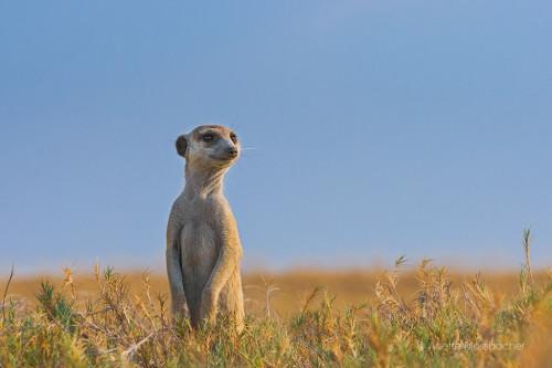 animals-animals-animals:</p> <p>Lookout (byAnette Mossbacher)