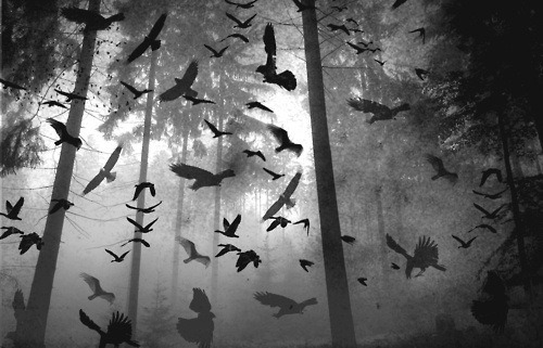 THE BIRDS SENSE THAT SOMETHING<br /> IS VERY WRONG.<br /> THE TOWN OF OASIS IS DOOMED<br /> UNLESS THE DEAD ARE STOPPED.<br /> THE DEAD GAME.