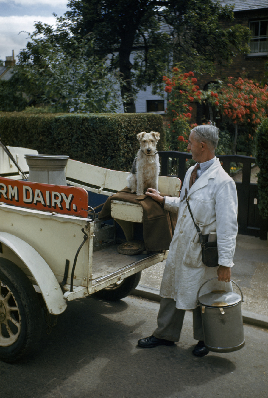 A milkman and his terrier pose at the back of a milk truck, May 1948.Photograph by Melville B. Grosvenor, National Geographic