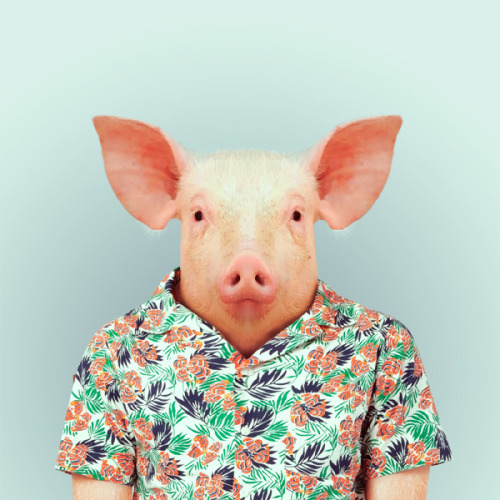 PIG by Yago Partal for ZOO PORTRAITS