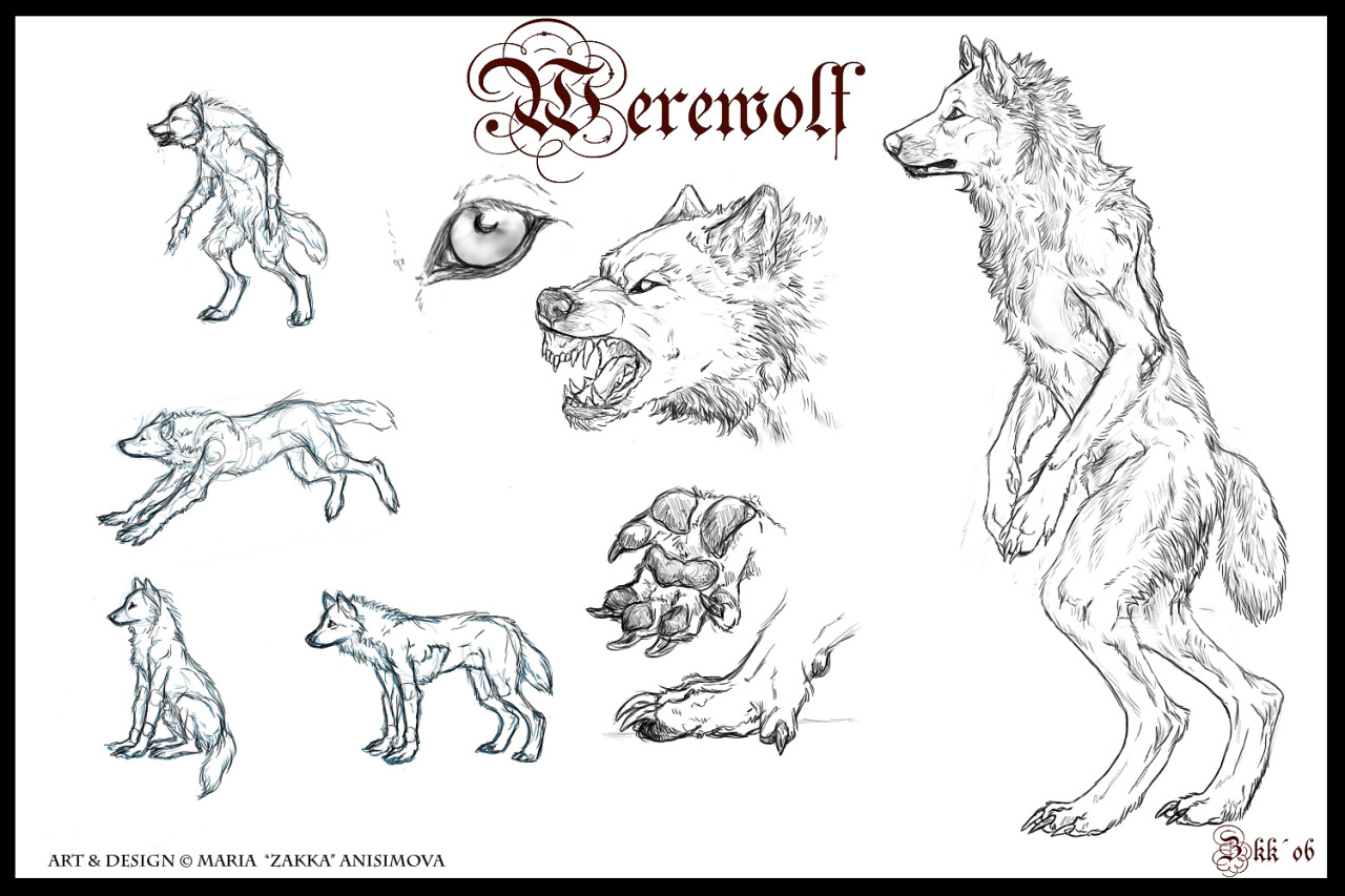 Drawing Art Wolf Draw Fantasy Anatomy Wolves Reference How