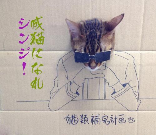 cardboard cat attack!!!!