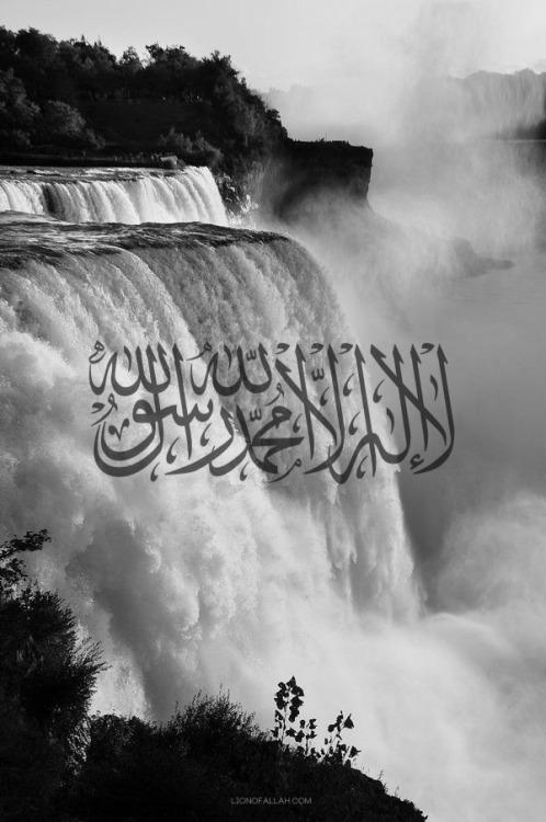 lionofallah:O Allah, make the shahada the last words we utter in this deceiving Dunya, Ameen.