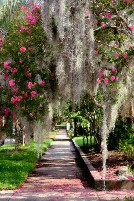 İspanyolca Moss Downtown Charleston