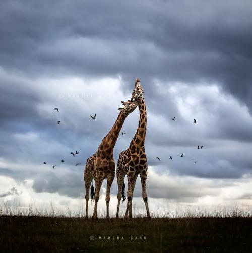 "magicalnaturetour:</p><br /><p>""Wildscape"" by Marina Cano :)"