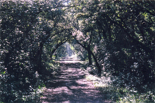 An Aisle Lined with Trees.