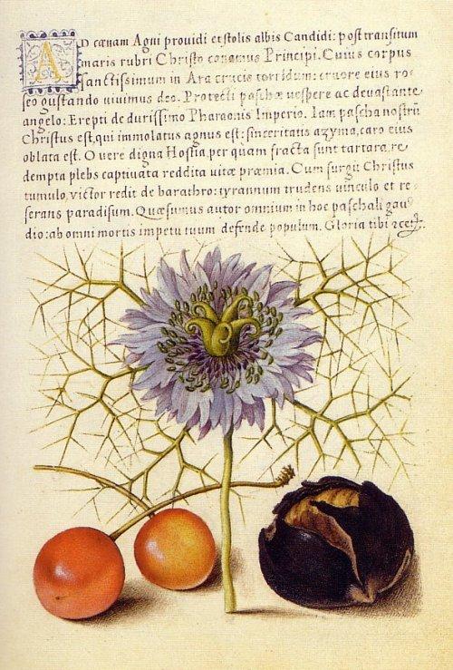 Mira Calligraphiae Monumenta- Joris Hoefnagel,Flemish illustrator,16th century