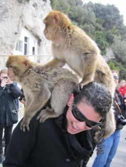Two monkeys!