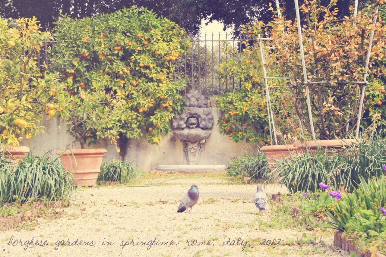 I slipped my arm between the iron fence and picked two beautiful oranges from a tree in the borghese gardens, planted in the renaissance, forbidden to commoners, on the former spot of the ancient roman gardens of lucullus. The fruit was bittersweet.