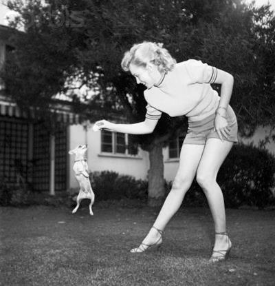 Marilyn Monore/ Chihuahua</p><br /> <p>© Michael Ochs Archives/Corbis © Corbis. All Rights Reserved.