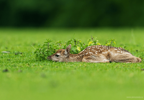 ecocides: Hidden fawn | image by Peter Krejzl