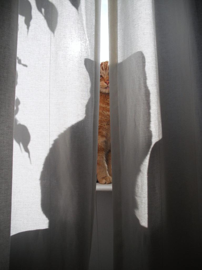 dontcallmebetty:Beanz the purring shadow (von Hazel Terry)