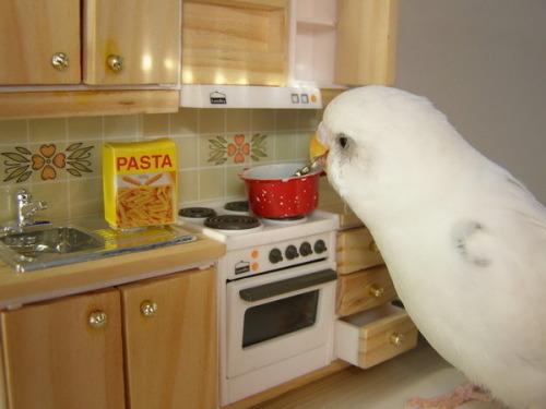 cespur:</p> <p>im just a simple bird living a simple life<br />