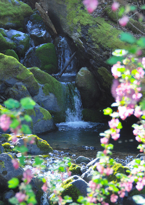 bluepueblo:</p> <p>Waterfall, Humboldt, California<br /> photo via kymkemp</p> <p>Flowers and Good Wishes to all my followers.<br /> HAPPY VALENTINE'S DAY